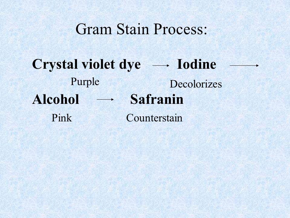 Gram Stain Process: Crystal violet dye Iodine Alcohol Safranin Purple