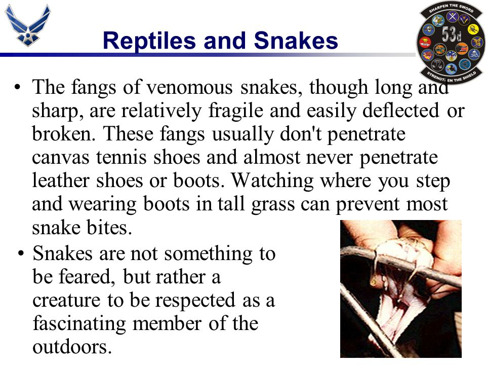 Reptiles and Snakes