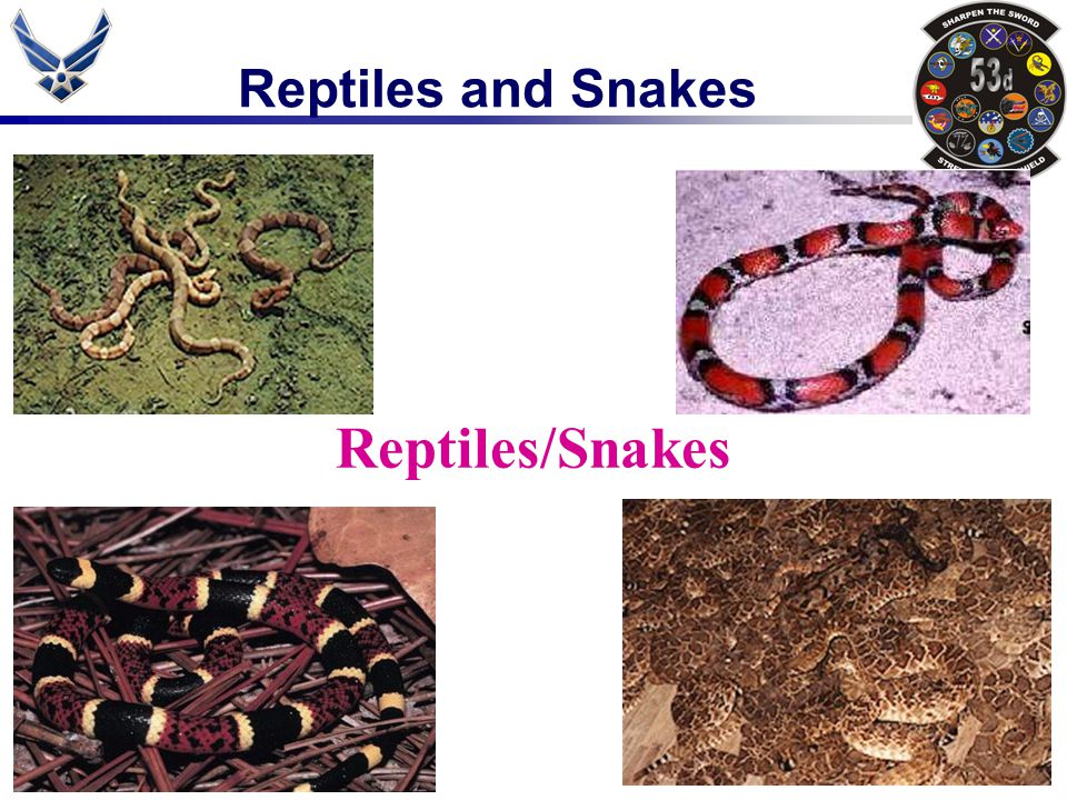 Reptiles and Snakes Reptiles/Snakes
