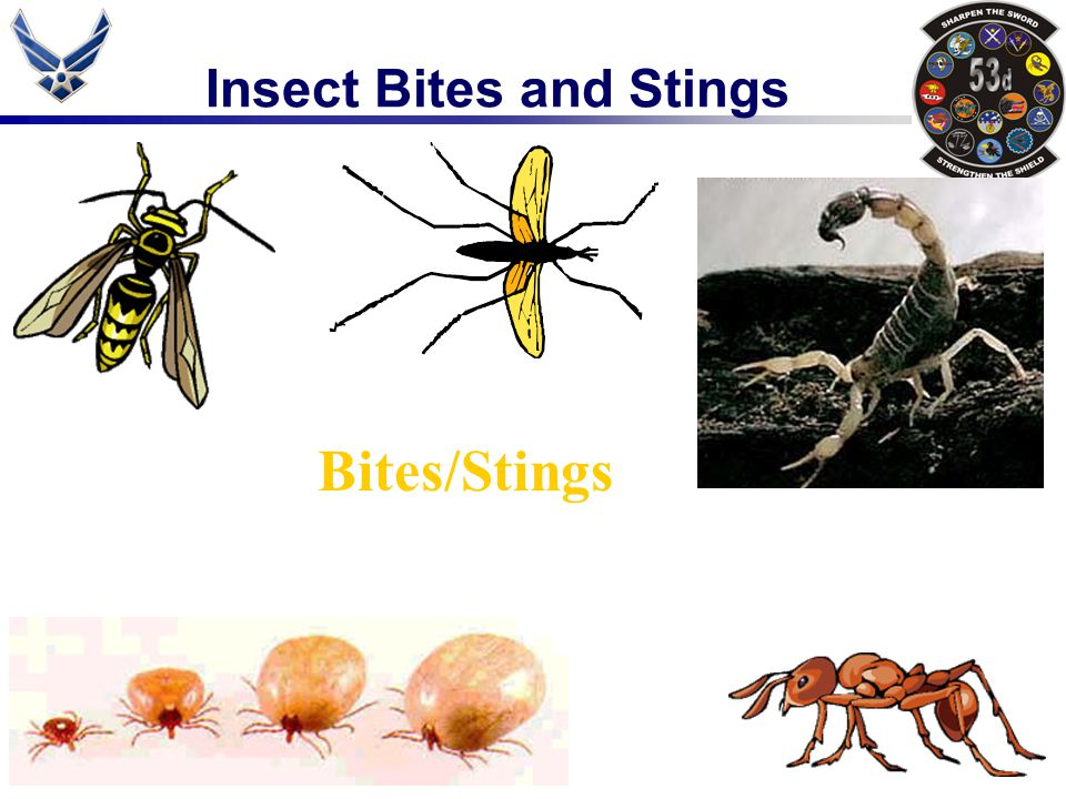 Insect Bites and Stings