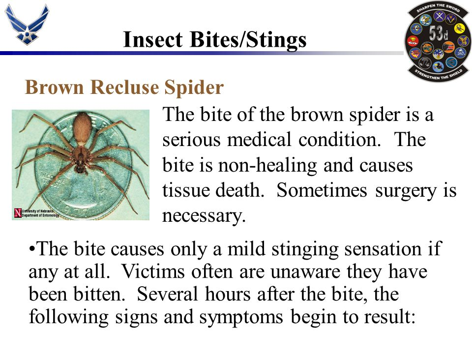 Insect Bites/Stings Brown Recluse Spider
