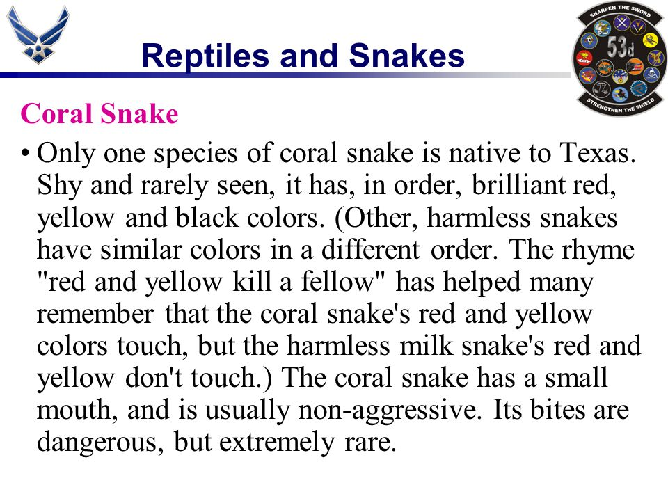 Reptiles and Snakes Coral Snake