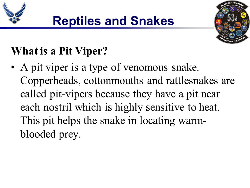 Reptiles and Snakes What is a Pit Viper