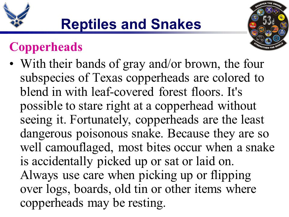 Reptiles and Snakes Copperheads