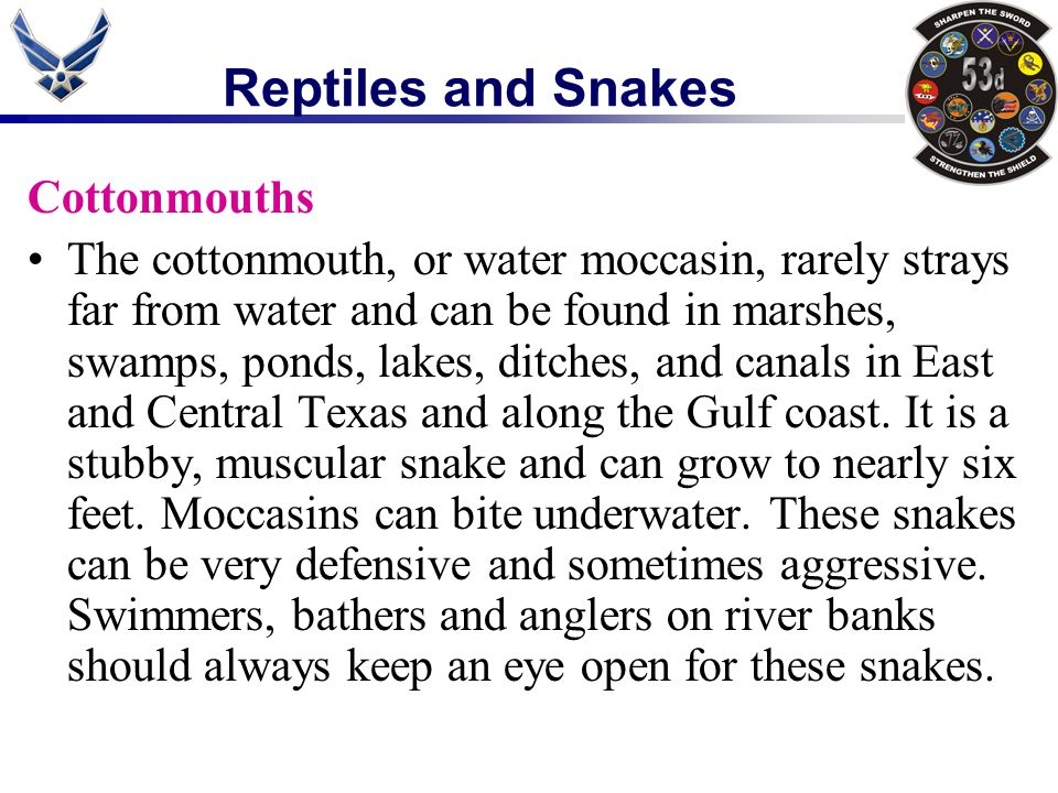 Reptiles and Snakes Cottonmouths