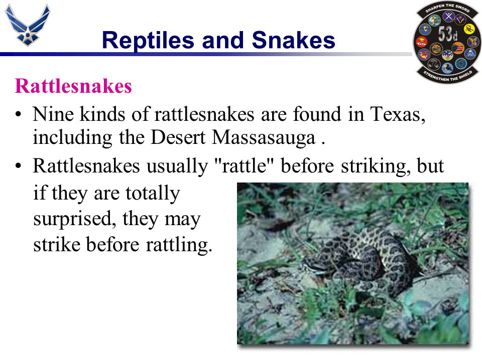 Reptiles and Snakes Rattlesnakes