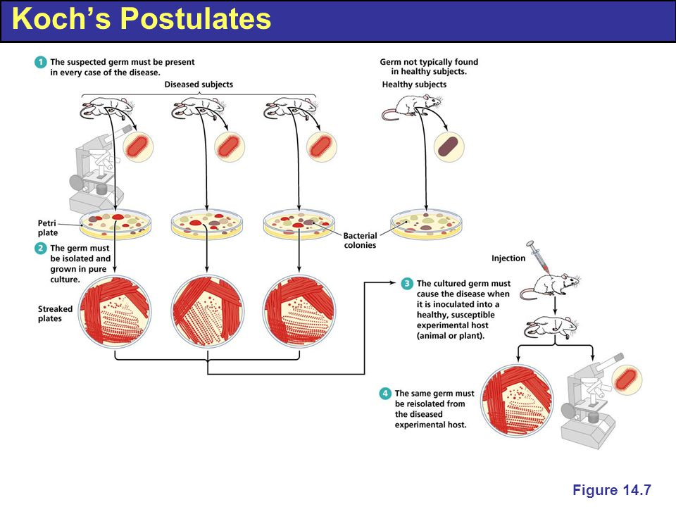 Koch's Postulates Figure 14.7