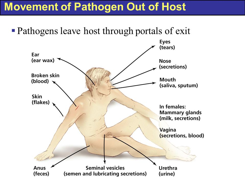 Movement of Pathogen Out of Host