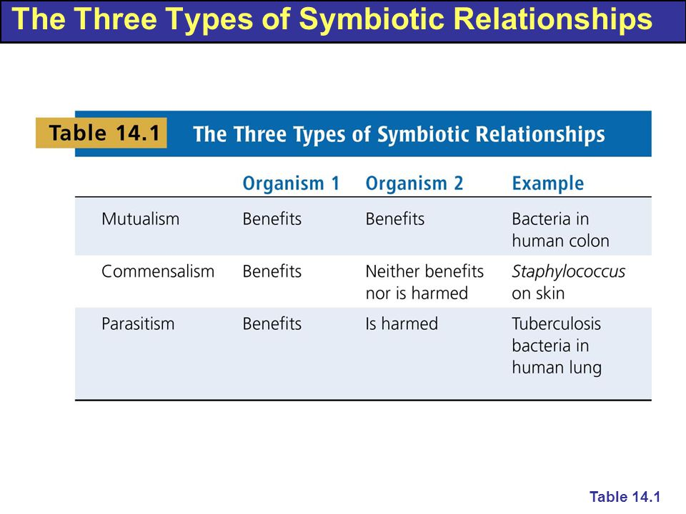 The Three Types of Symbiotic Relationships