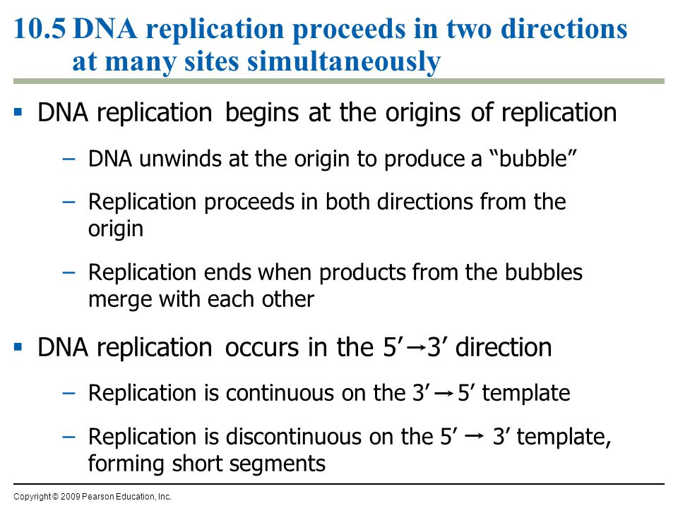 10.5 DNA replication proceeds in two directions at many sites simultaneously