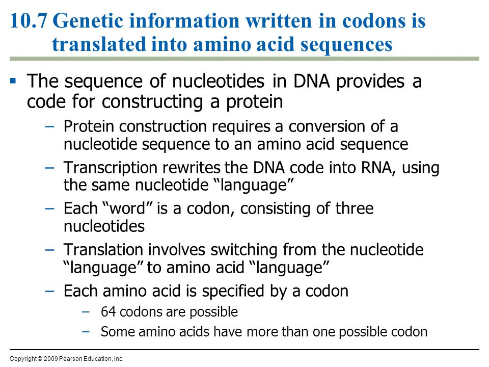 10.7 Genetic information written in codons is translated into amino acid sequences