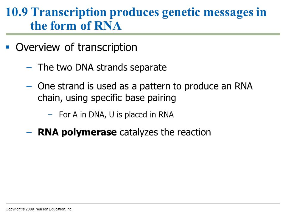 10.9 Transcription produces genetic messages in the form of RNA