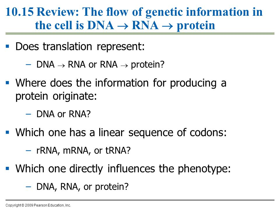 10.15 Review: The flow of genetic information in the cell is DNA  RNA  protein