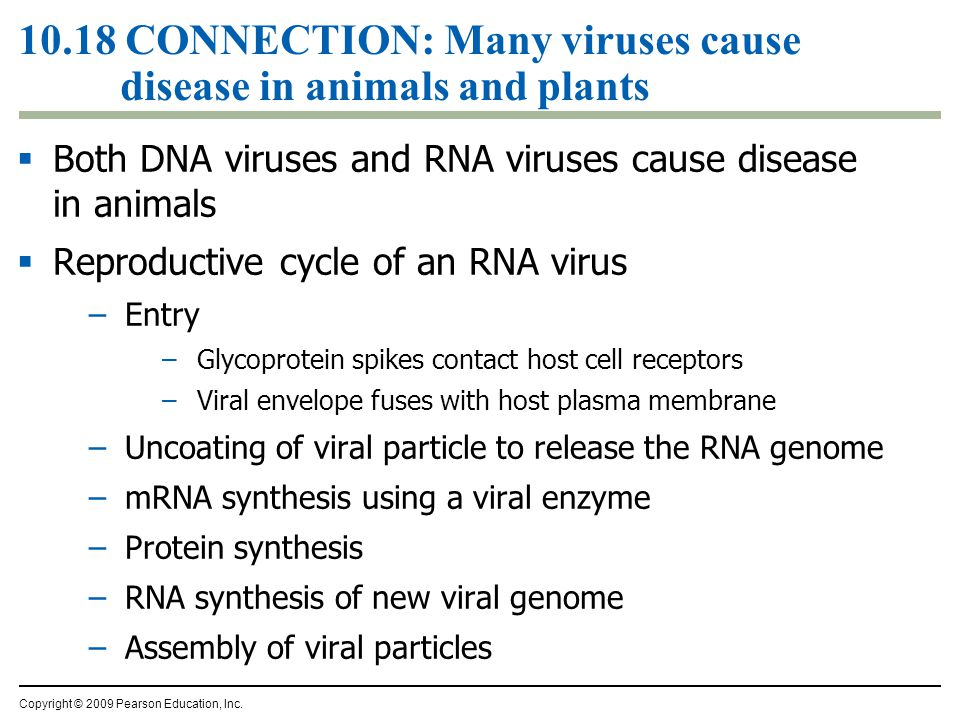 10.18 CONNECTION: Many viruses cause disease in animals and plants