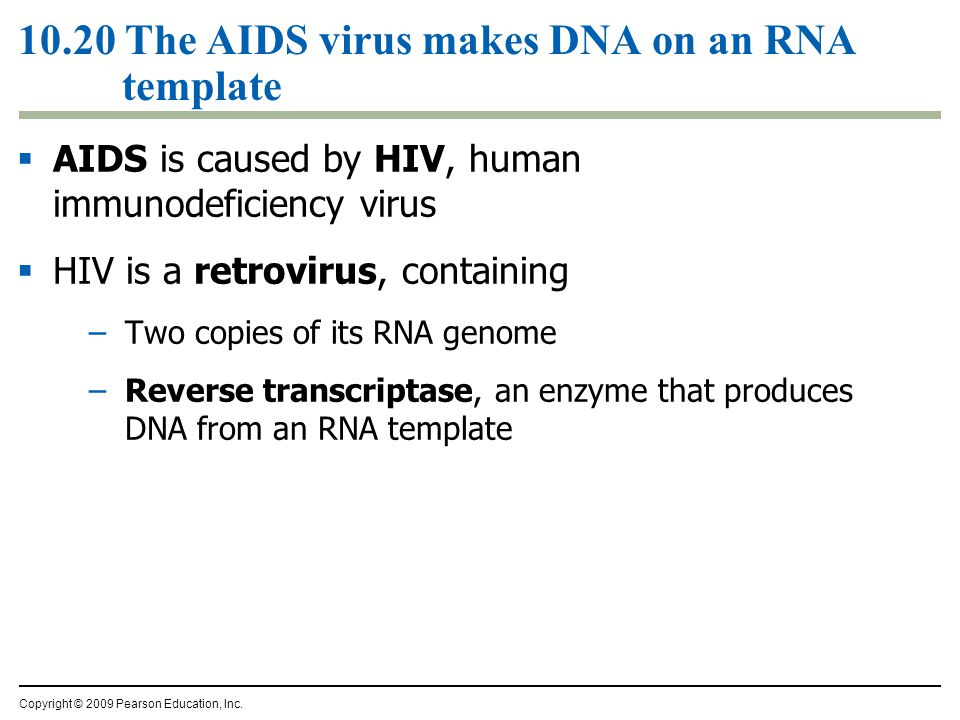 10.20 The AIDS virus makes DNA on an RNA template