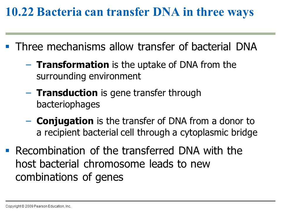 10.22 Bacteria can transfer DNA in three ways