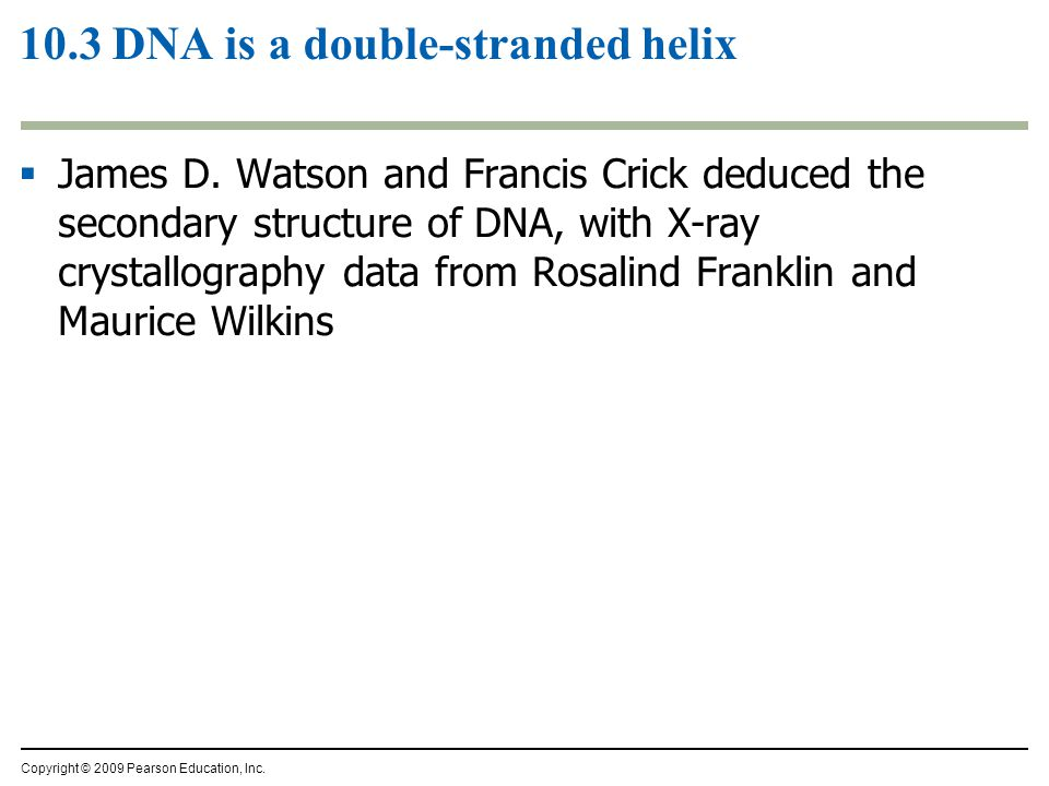 10.3 DNA is a double-stranded helix