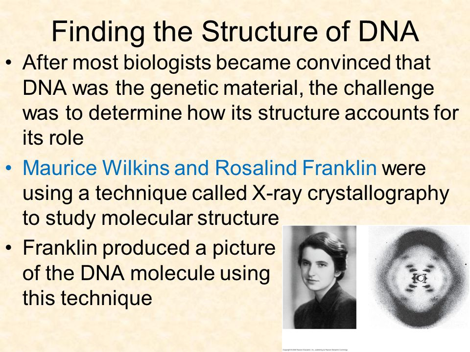 Finding the Structure of DNA