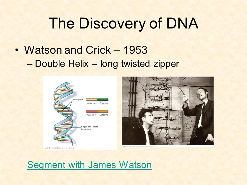 The Discovery of DNA Watson and Crick – 1953