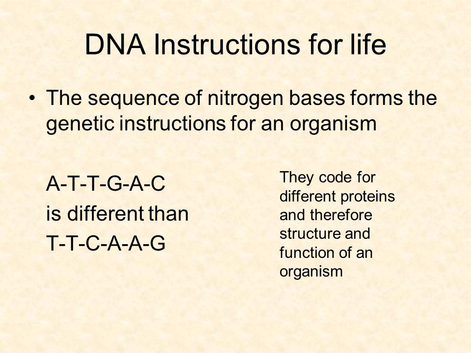 DNA Instructions for life