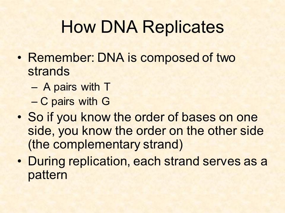How DNA Replicates Remember: DNA is composed of two strands