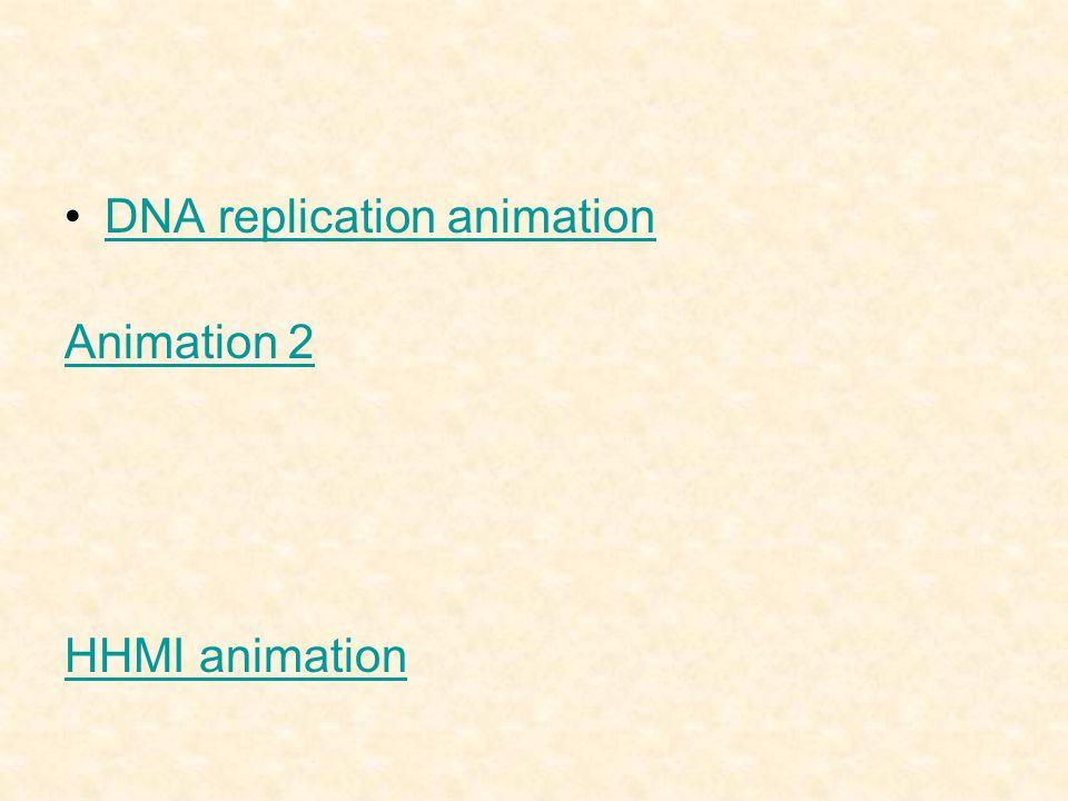 DNA replication animation