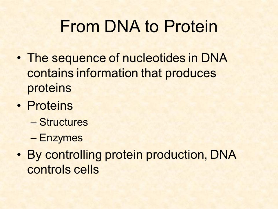 From DNA to Protein The sequence of nucleotides in DNA contains information that produces proteins.