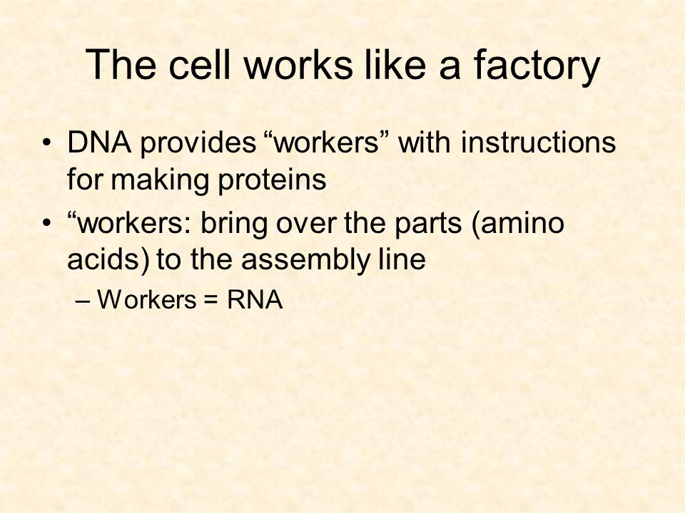 The cell works like a factory