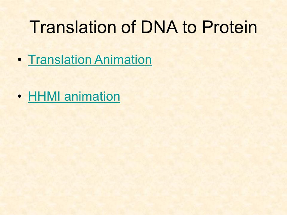 Translation of DNA to Protein