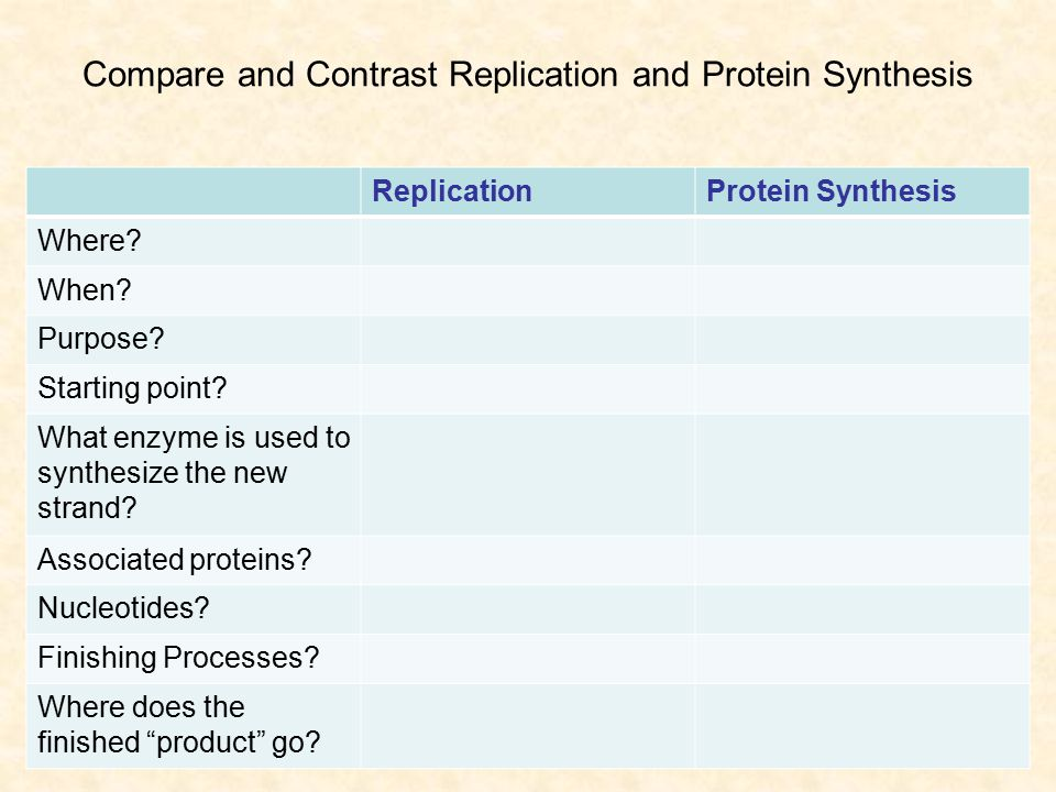 Compare and Contrast Replication and Protein Synthesis