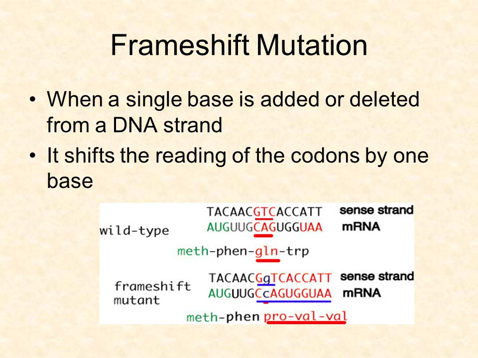 Frameshift Mutation When a single base is added or deleted from a DNA strand.