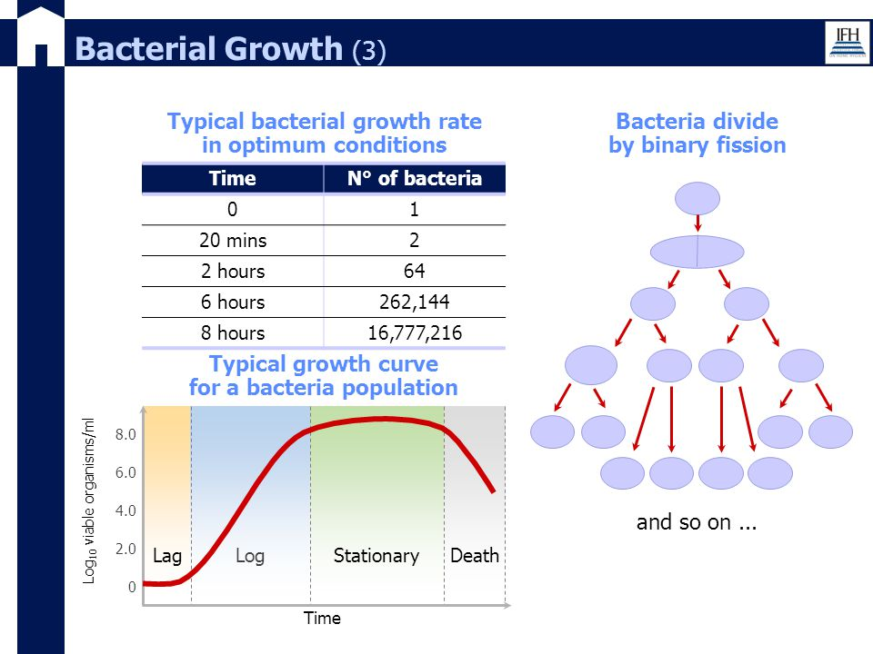 Bacterial Growth (3) Typical bacterial growth rate in optimum conditions. Bacteria divide by binary fission.