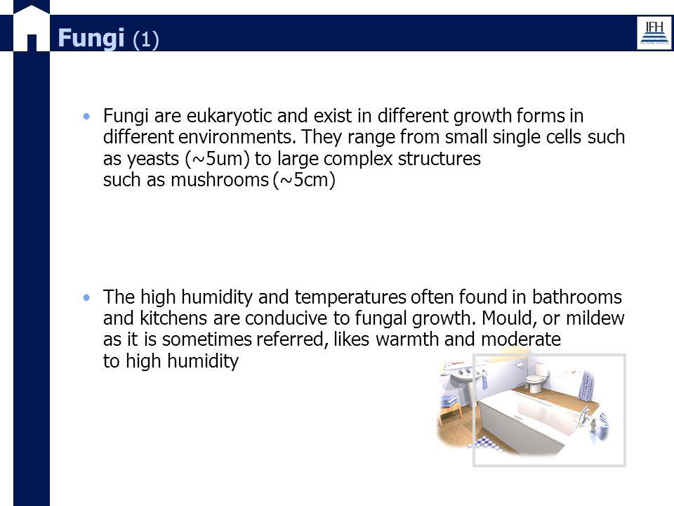 Fungi (1)