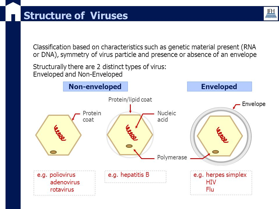 Structure of Viruses Non-enveloped Enveloped