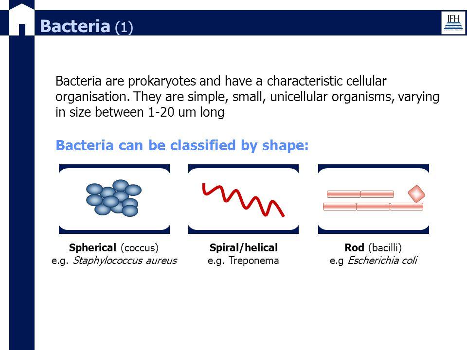 e.g. Staphylococcus aureus