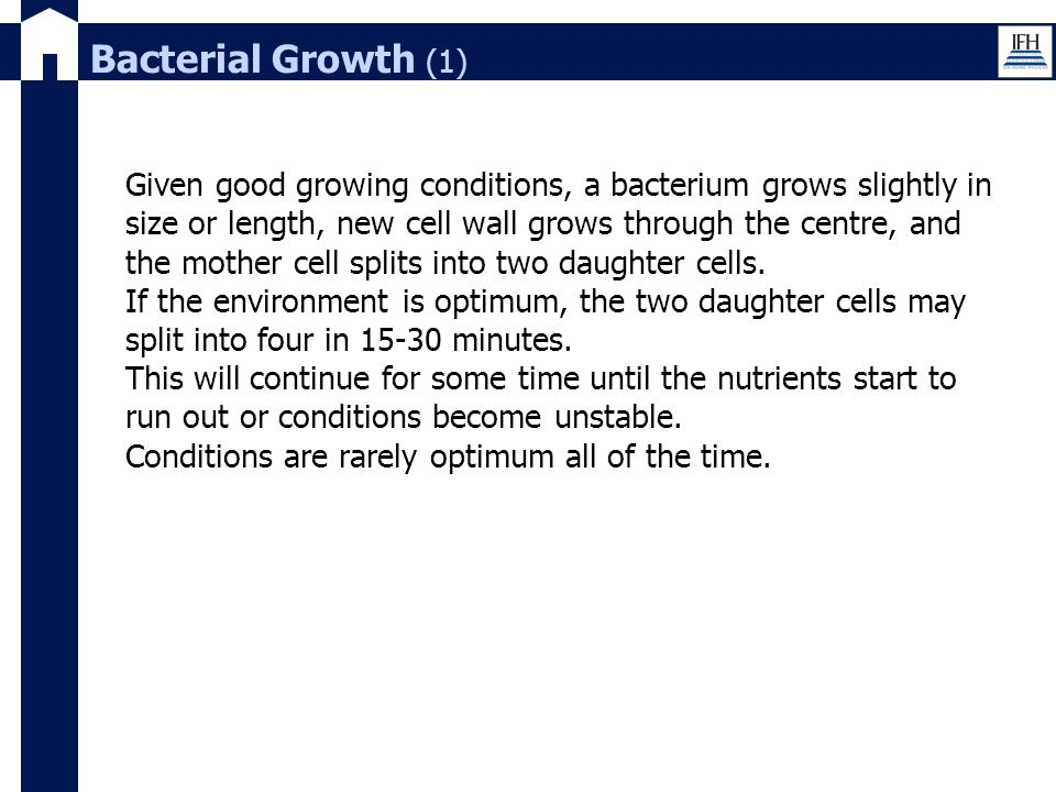 Bacterial Growth (1)