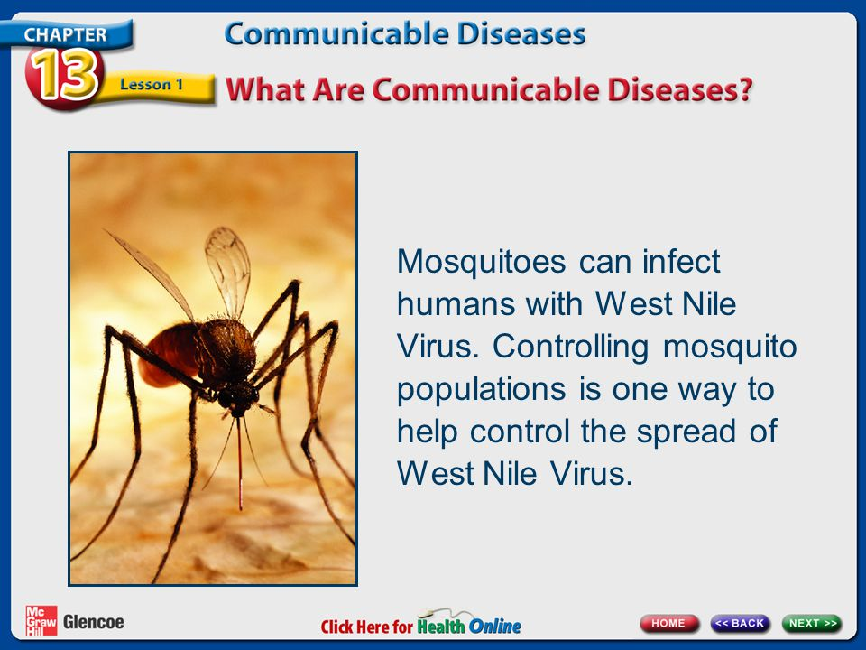 Mosquitoes can infect humans with West Nile Virus