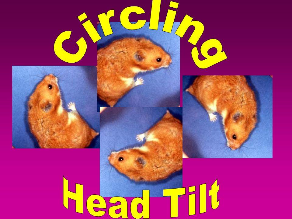 Circling Head Tilt