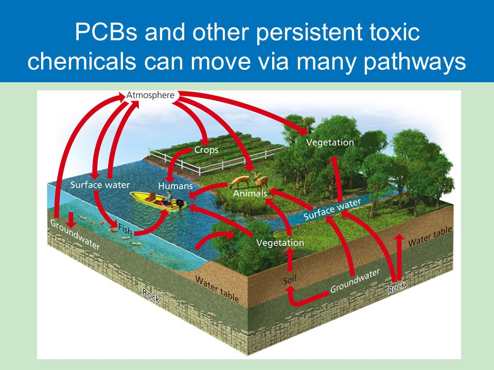 PCBs and other persistent toxic chemicals can move via many pathways
