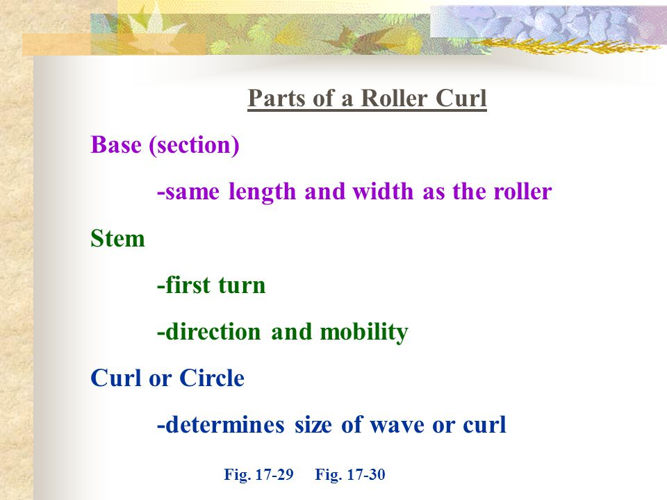 Parts of a Roller Curl Base (section) -same length and width as the roller. Stem. -first turn. -direction and mobility.