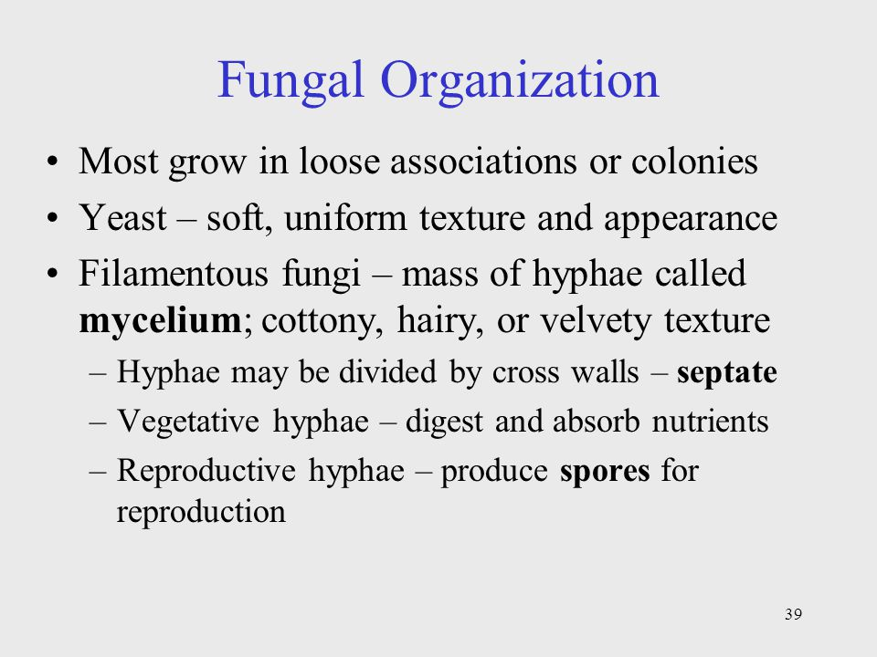 Fungal Organization Most grow in loose associations or colonies