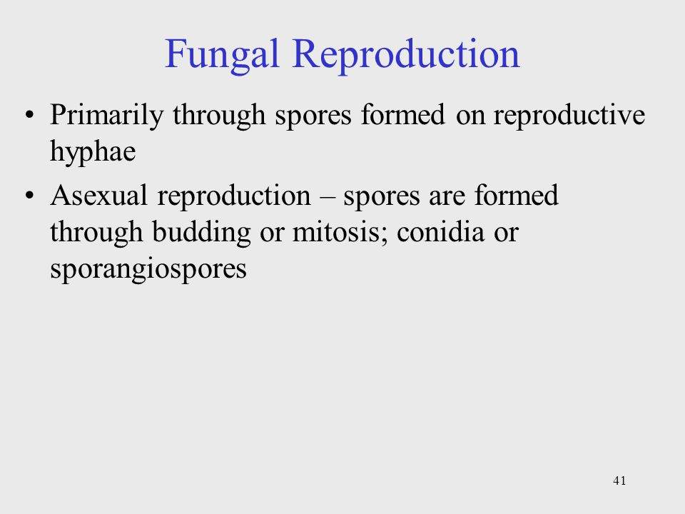 Fungal Reproduction Primarily through spores formed on reproductive hyphae.