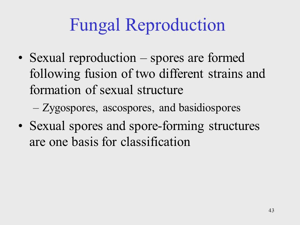 Fungal Reproduction Sexual reproduction – spores are formed following fusion of two different strains and formation of sexual structure.