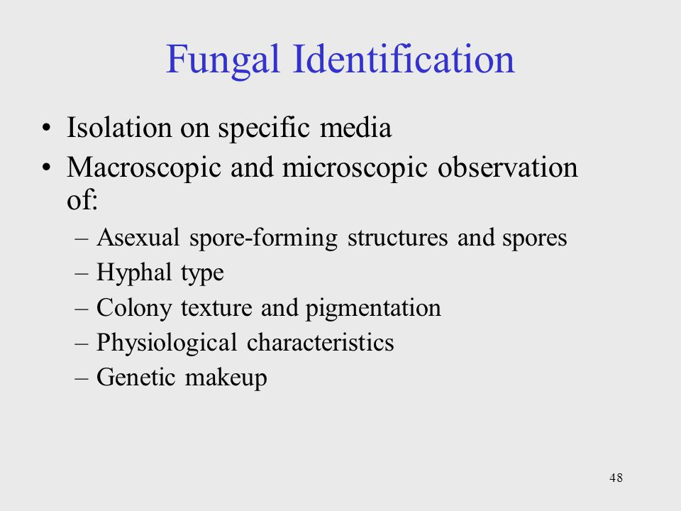 Fungal Identification