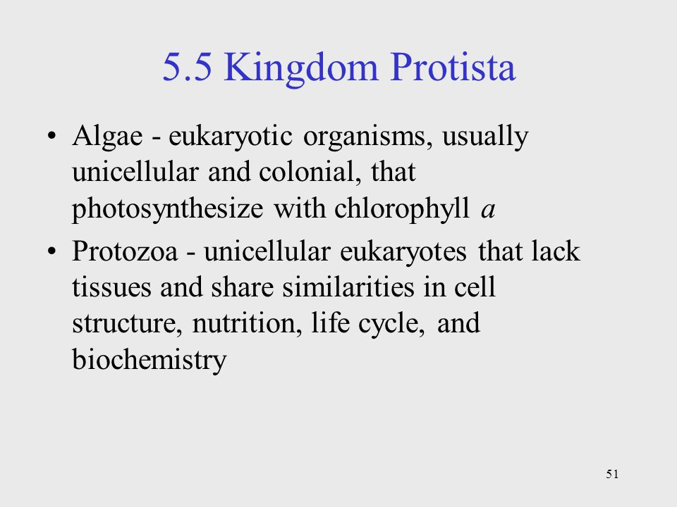 5.5 Kingdom Protista Algae - eukaryotic organisms, usually unicellular and colonial, that photosynthesize with chlorophyll a.