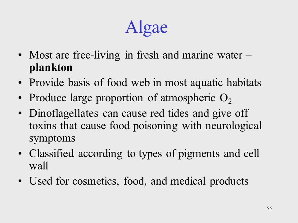 Algae Most are free-living in fresh and marine water – plankton