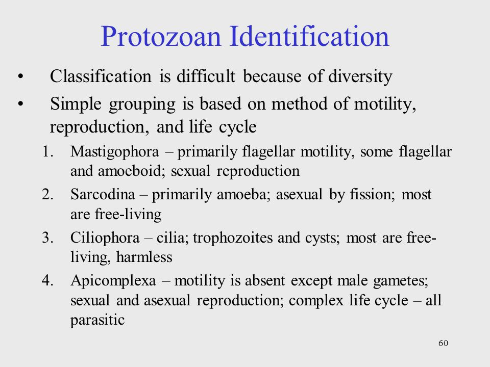 Protozoan Identification