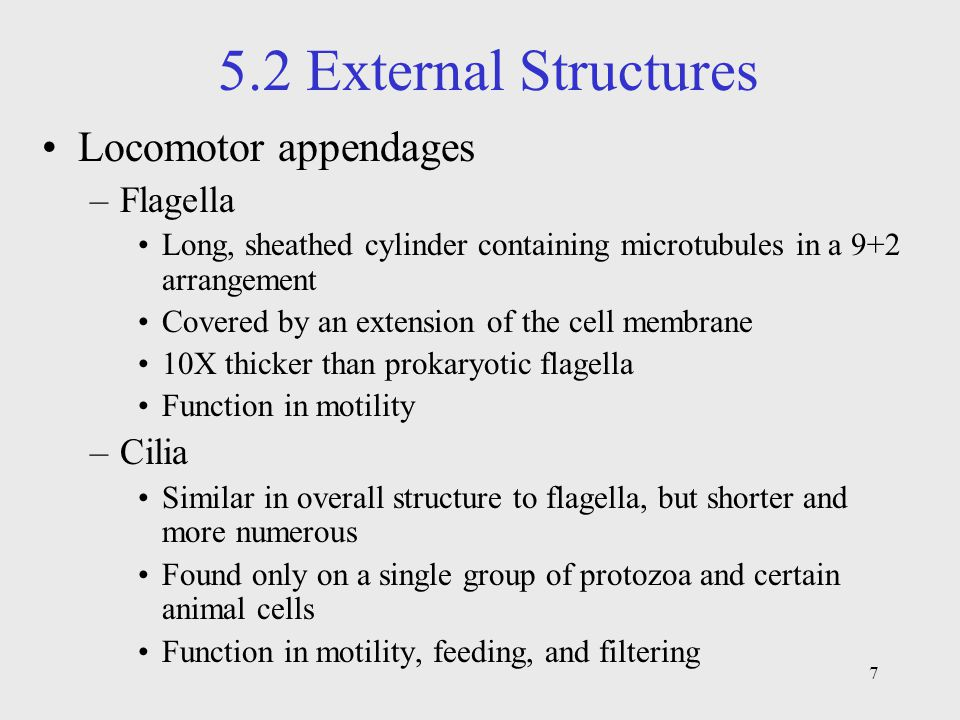 5.2 External Structures Locomotor appendages Flagella Cilia