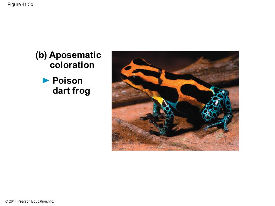 (b) Aposematic coloration Poison dart frog Figure 41.5b