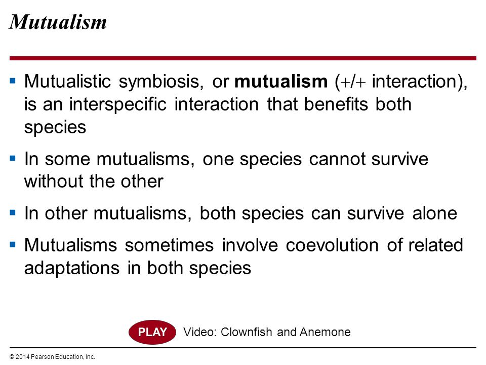 Mutualism Mutualistic symbiosis, or mutualism (/ interaction), is an interspecific interaction that benefits both species.